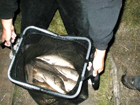 Ray Cook winner of first evening match at the clay pit, some of the carp in a total of 64lb 8oz - new 3 hour match record